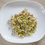 Mung and chick-pea sprouts Stock Image