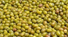 Mung  Moong Beans Stock Photos