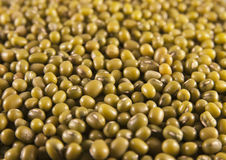 Mung or moong beans Stock Image