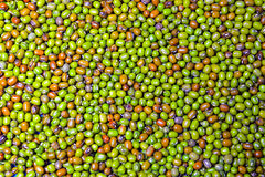 Mung or moong beans Royalty Free Stock Images
