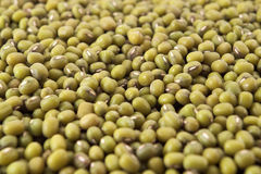 Mungo Beans. Close up of mungo beans Royalty Free Stock Photos