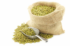 Mungo beans (Vigna radiata) in a burlap bag Stock Images