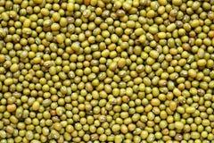 Mungobohnen Lizenzfreies Stockbild