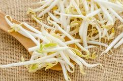 Mungobohnen oder Sojabohnensprossen Stockfoto