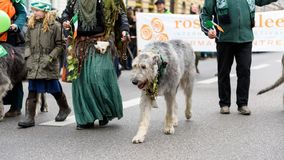 MUNICH, BAVARIA, GERMANY -  MARCH 13, 2016: group of people in c. Eltic clothing with wolfhounds at the St. Patrick`s Day Parade on March 13, 2016 in Munich Royalty Free Stock Photos