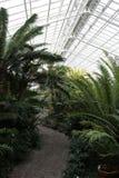 Munich botanisk trädgård Arkivfoto