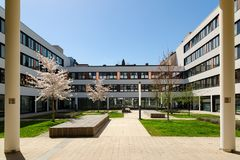 Sakura spring blossom in courtyard of modern office building Royalty Free Stock Image