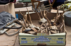 MUNICH Germany - Open air giant flea market (Riesenflohmarkt). Trophy hunting, deer antlers , and other merchandise on sell at open air giant flea market in stock images