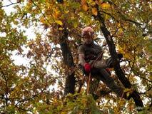 MUNICH TYSKLAND - OKTOBER 21, 2017: Filialer för ett trädklättrareklipp av ett stort träd royaltyfria bilder