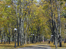 Municipal boulevard in a sunny autumn day Royalty Free Stock Photos