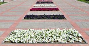 Municipal flower beds. On a sunny day stock photo