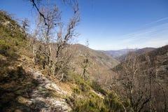 Muniellos Nature Reserve, Spain. Asturias, Spain. Valley at the Muniellos Nature Reserve Reserva natural integral, area of woodland along the river Muniellos stock photography