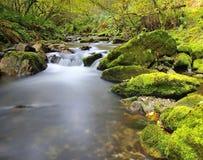 Muniellos river. Stock Image