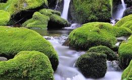 Muniellos River, asturias. Royalty Free Stock Photography