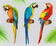 Munkhättapapegoja macaw symbolsuppsättning för vektor 3d Arkivbild