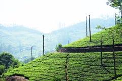 Munnar小山驻地的印度茶园 库存照片