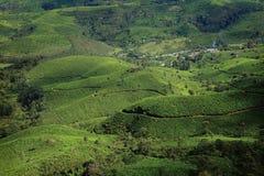 Munnar的茶园 免版税库存图片