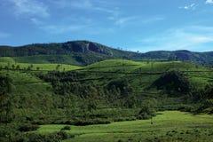 Munnar的茶园 免版税库存照片