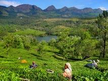 Munnar,喀拉拉,印度五颜六色的风景  免版税库存图片