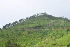 Munnar,喀拉拉,印度-一个绿色自然风景小山的茶园  免版税图库摄影