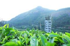 Munnar är en breathtakingly härlig vykorts- kullestation som ligger på en höjd av 1600 M ovanför havsnivån Fotografering för Bildbyråer