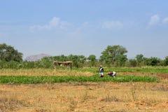 MUNNAR, ИНДИЯ 17-ОЕ ФЕВРАЛЯ: Индийский работник 17-ого февраля 2013 внутри Стоковое Изображение RF
