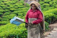 MUNNAR, ИНДИЯ - 18-ОЕ ФЕВРАЛЯ 2013: Неопознанная индийская женщина Стоковые Изображения