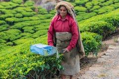 MUNNAR, ИНДИЯ - 18-ОЕ ФЕВРАЛЯ 2013: Неопознанная индийская женщина Стоковые Фото