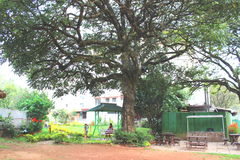 Munnar Royaltyfri Fotografi