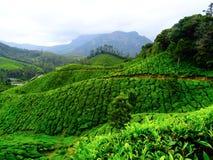 Munnar herbaty wzgórza Zdjęcie Royalty Free