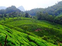 Munnar herbaty wzgórza Zdjęcia Stock