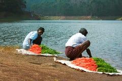 MUNNAR, KERALA, INDE - 8 JANVIER 2015 : Les personnes locales lavent des carottes sur le lac dam de Kundala de bord de lac dans M Photos libres de droits