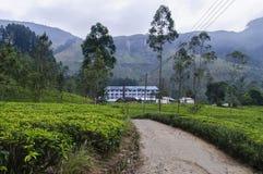 Munnar, Kerala, Indien Stockfotos