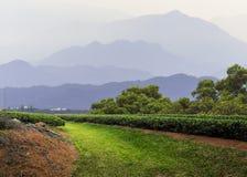 Munnar, Kerala, Indien Lizenzfreie Stockfotos