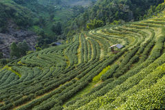 Munnar, Kerala, Indien Lizenzfreies Stockbild