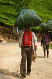 MUNNAR KERALA, INDIEN - 08 JANUARI 2015: Teplockare bär påsar med teblad på hans huvud i Munnar, Indien av 08 JANUARI 2015 Arkivfoton