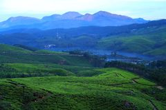 MUNNAR-MISTY MORNING. The rolling hills around Munnar, South India`s largest tea-growing region, are carpeted in emerald-green tea plantations, contoured Royalty Free Stock Photos