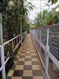 Munnar ogród botaniczny fotografia stock