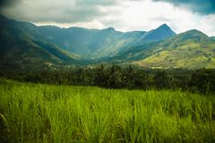 Munnar pasmo górskie od kerela Zdjęcie Stock