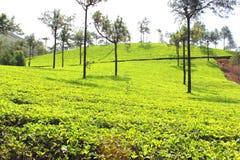 Munnar Stock Photos