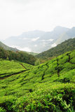 Munnar tea fields Stock Image