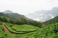 Munnar tea fields Stock Photo