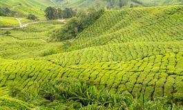 Munnar tea plantations Royalty Free Stock Images