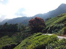 Munnar tea plantations. Munnar hills with tea plantations Stock Image