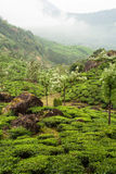 Munnar tea plantations india Stock Photo