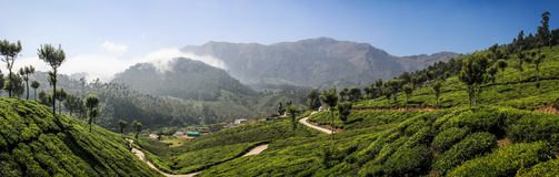 Panoramic view of the green lush tea hills and mountains around Munnar, Kerala, India. Munnar is a town and hill station located in the Idukki district of the Royalty Free Stock Photo