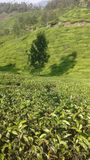 Munnar TS TET Stock Photography