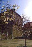 Munnich, arbres bavarois de stellata de Musée National de l'Allemagne et de magnolia Photographie stock libre de droits