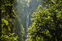 Free Stock Images  Waterfall In Oregon Picture. Image  5530159 cb740a690c