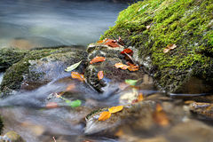 Muntain creek close-up with leafs Royalty Free Stock Images